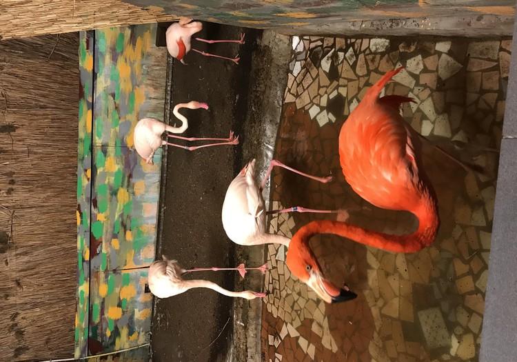 Ziemas nakts Rīgas Zoo