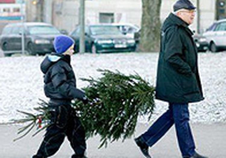 Šogad Ziemassvētku eglīšu cenas varētu būt par 10% mazākas