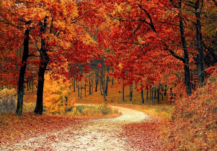 KONKURSS: Iesaki vietas Latvijā, kur doties vērot zelta rudeni!