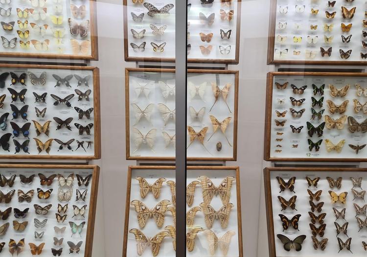 Kauņas T.Ivanauska zooloģijas muzejs