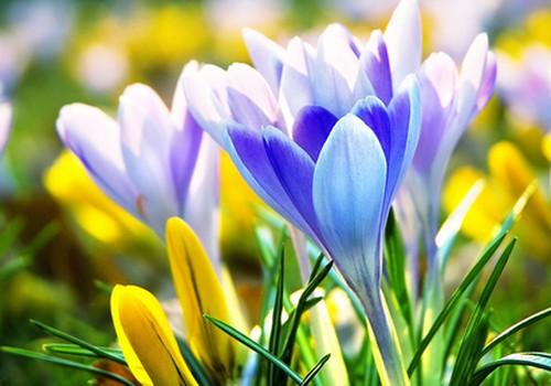 Mostās daba un arī alerģijas : jaunākā augu ziedēšanas prognoze
