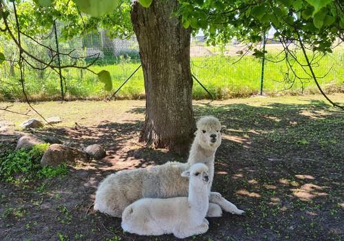 Mini Kuiviž Zoo
