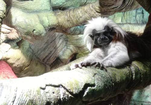Latgales zoodārzs Daugavpilī