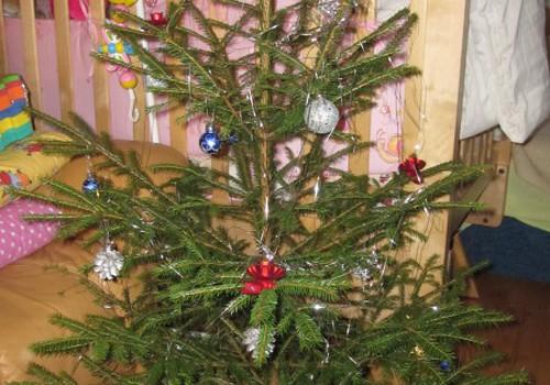 Kā mēs meklējām ziemassvētku eglīti