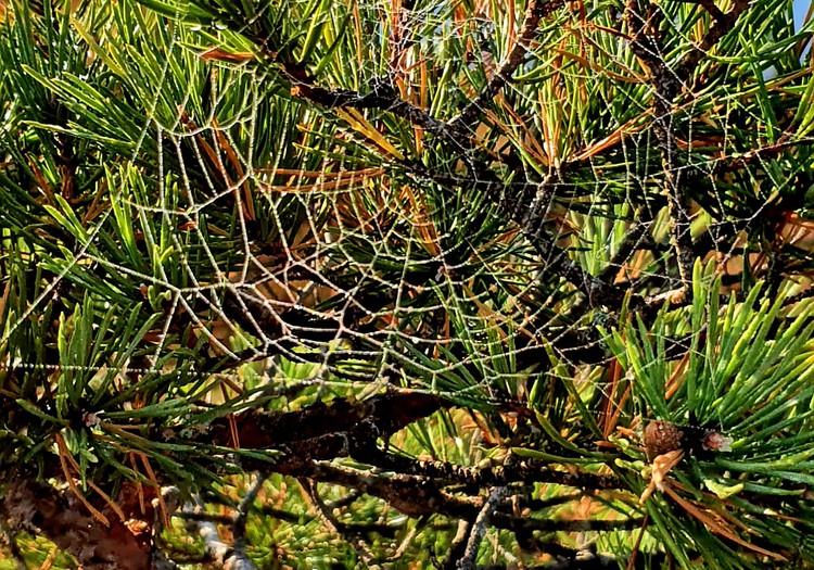 Lielā Ķemeru tīreļa taka rudenī