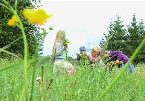 VIDEO: vācam zāļu tējas māmiņām! Kas jāņem vērā?