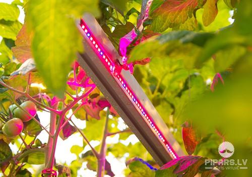 Getliņi EKO - vieta, kur tomāti un gurķi aug