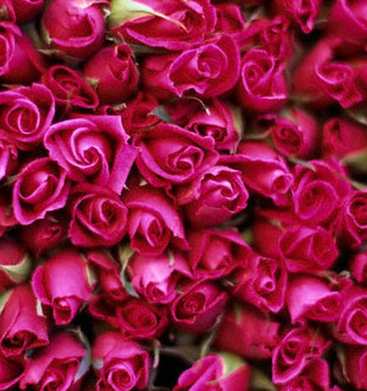 Kāda ir šodien dāvināto ziedu nozīme?