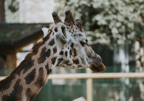 Vienmēr lieliskais Rīgas Zooloģiskais dārzs