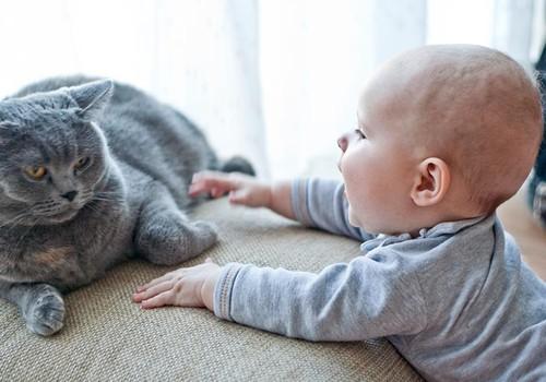 SKAT, KĀ ES AUGU: Un kā jūsu bērni izturas pret kaķiem?