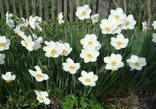 Uzplauksti pavasarim!