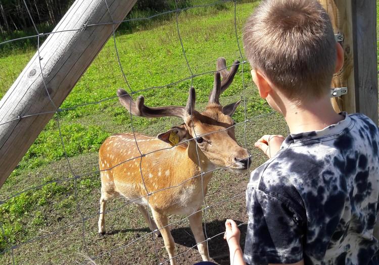 Mini Zoo-Brieži