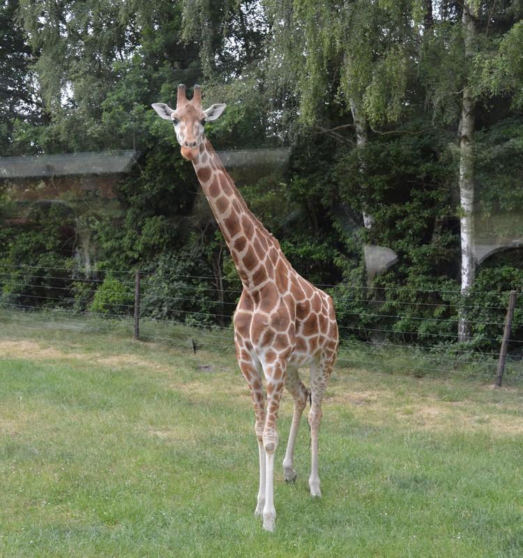 Kaut kas labāks par Zoodārzu- Serengeti Safari parks