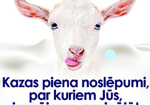 Kazas piena noslēpumi, par kuriem Jūs, iespējams, nezinājāt
