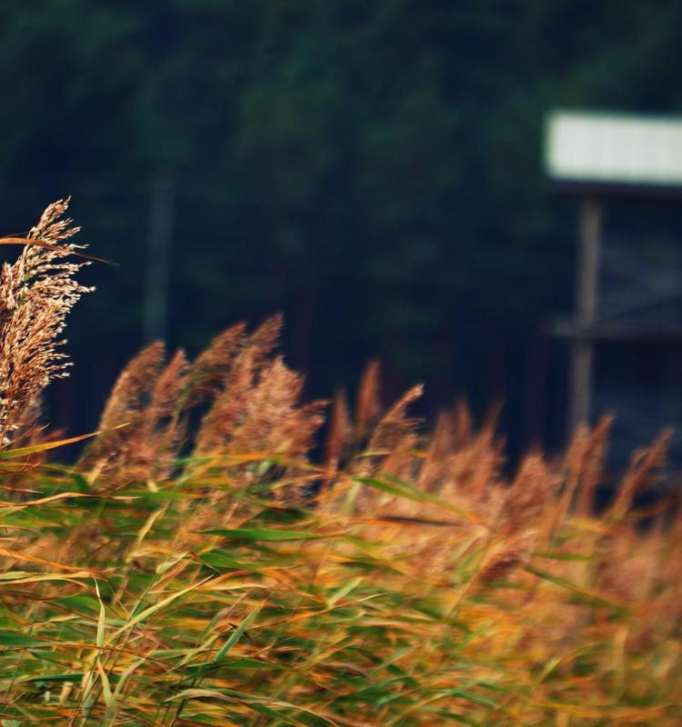 Mērsraga piejūras pļavu skatu tornis