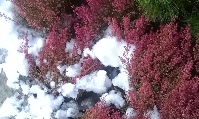 Apsveicu ar pirmo balto sniedziņu