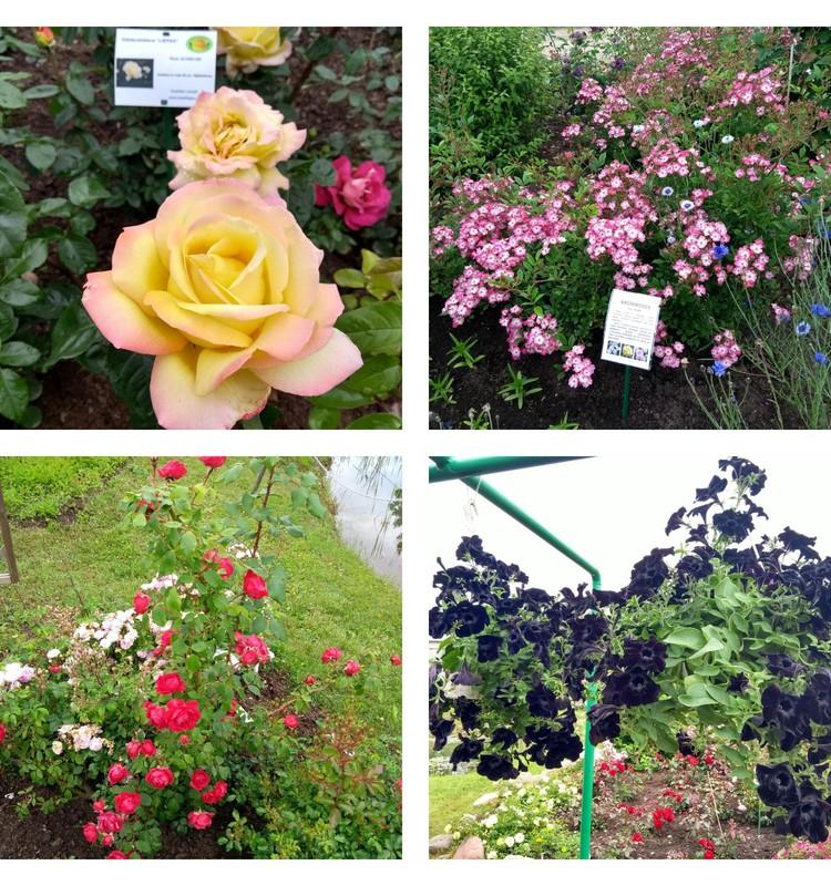 Kopā ar bēbīti lūkot krāšņākos ziedus dārza svētku stādu tirdziņā