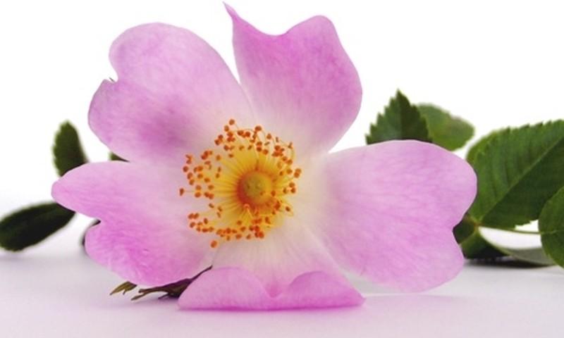 Baha ziedi grūtniecības laikā un pēcdzemdību periodā