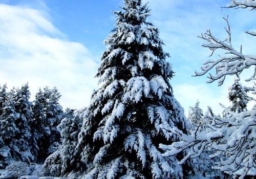 Šogad ziema īpašāka!
