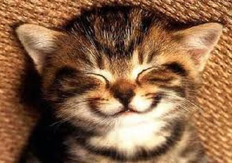 №13 Lana: Ar smaidu uz lūpām ejam uz priekšu!