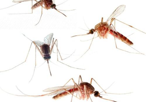 Vasara un ODI! Padomi, kā izvairīties no odu kodumiem!