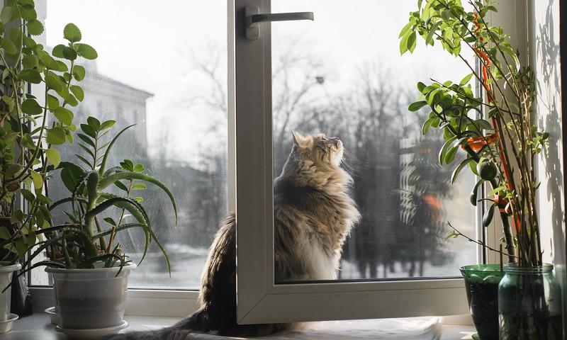 Logi un balkoni vaļā – drauds kaķim