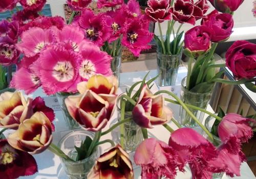 Pavasara ziedu skaistums