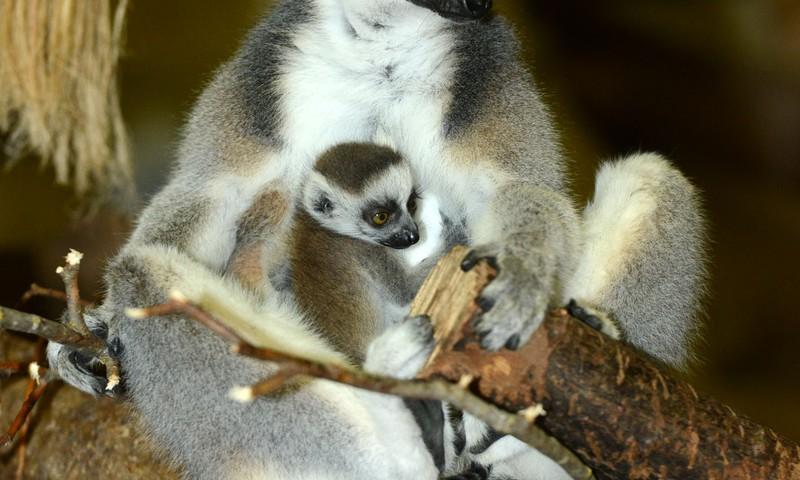 Ziemas naktis Zoodārzā un jauni mazuļi