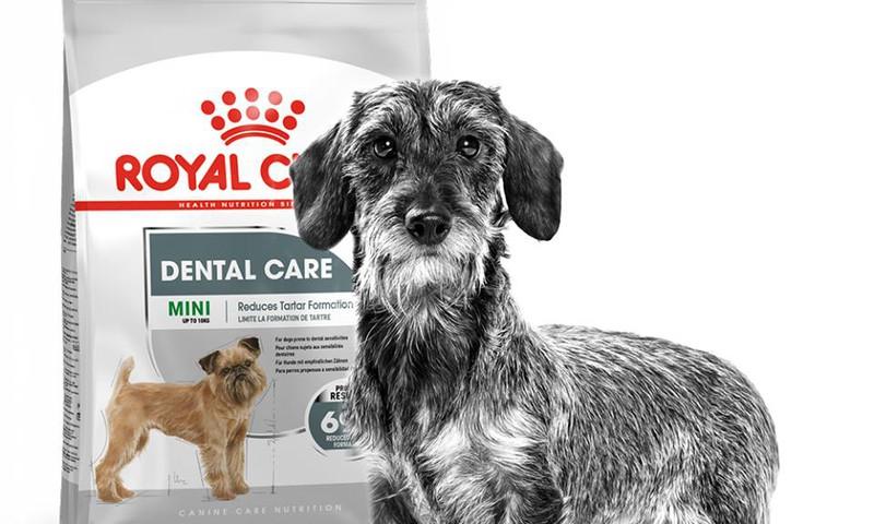 Parūpējies par sava suņa vārīgajām vietām!