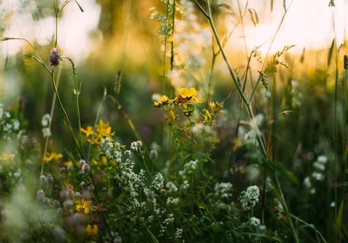 Sievišķīgie rituāli vasaras saulgriežos – 21. jūnijā jeb raganu laikā