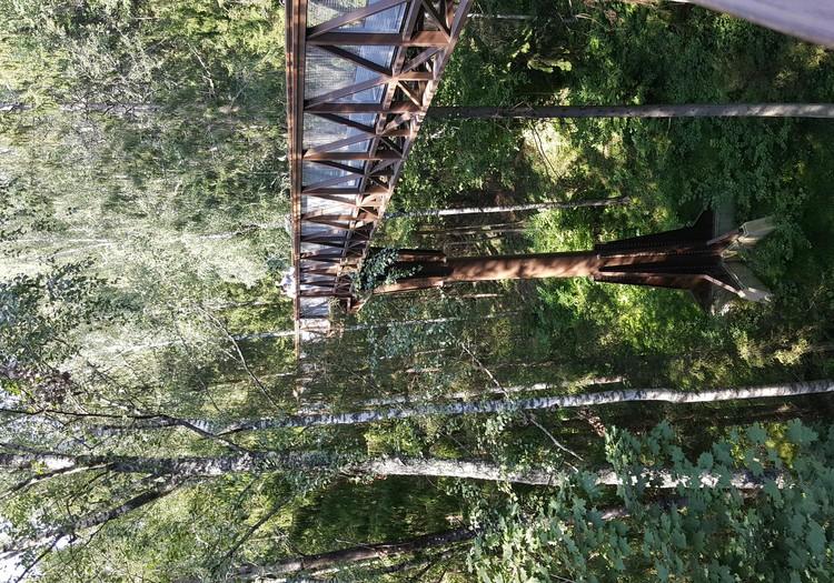 Pastaiga starp koku galotnēm Lietuvā