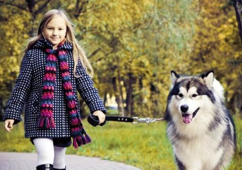 Bērns un mājdzīvnieks: mazu bērnu nevar atstāt bez uzraudzības kopā ar suni