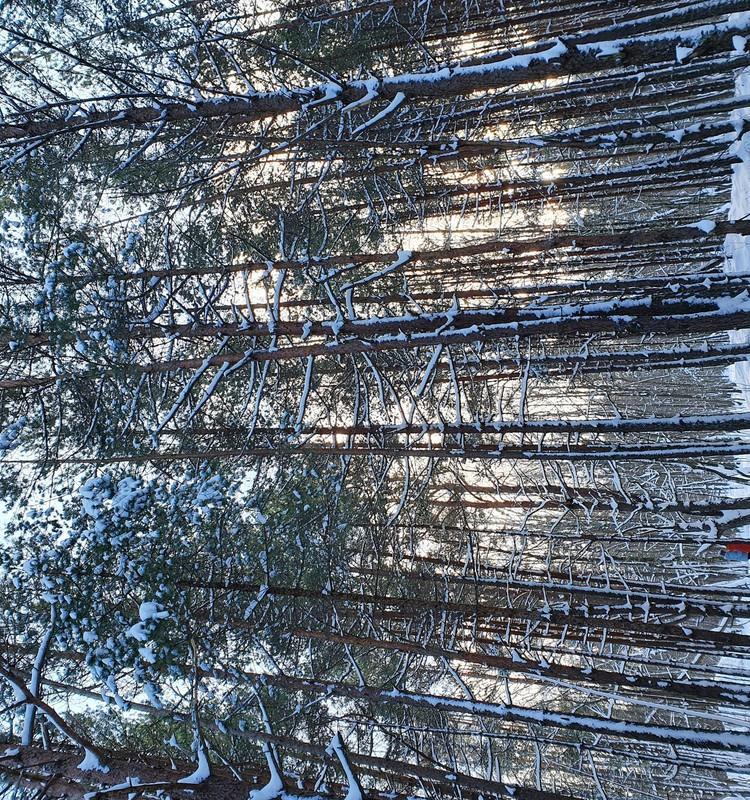 Ceļojam ziemā- Ragakāpas dabas parks un taka.