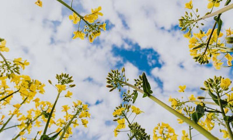 Padomi vasaras blakusefektu mazināšanai. Kukaiņu kodumi un apdegumi