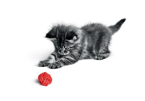 Mācies kopā ar kaķi!