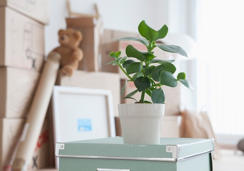 Kas jāņem vērā pirms mājokļa iegādes  jeb seši soļi līdz sapņu mājoklim