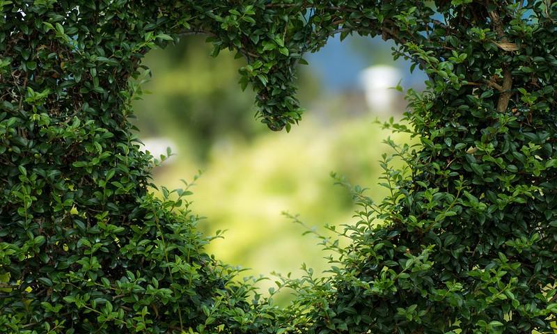 Pieci pamatprincipi zaļākam dzīvesveidam