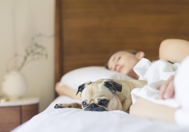 Saīsināt savu miega laiku, lai visu pagūtu. Vai tas ir tā vērts?