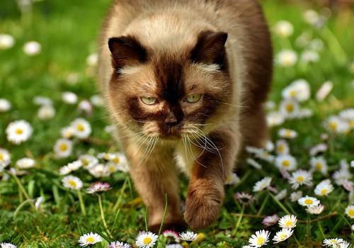 """Grāmatu """"Kaķēns margrietiņās"""" saņem..."""