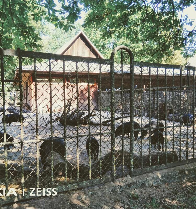 Kauņas zooloģiskais dārzs
