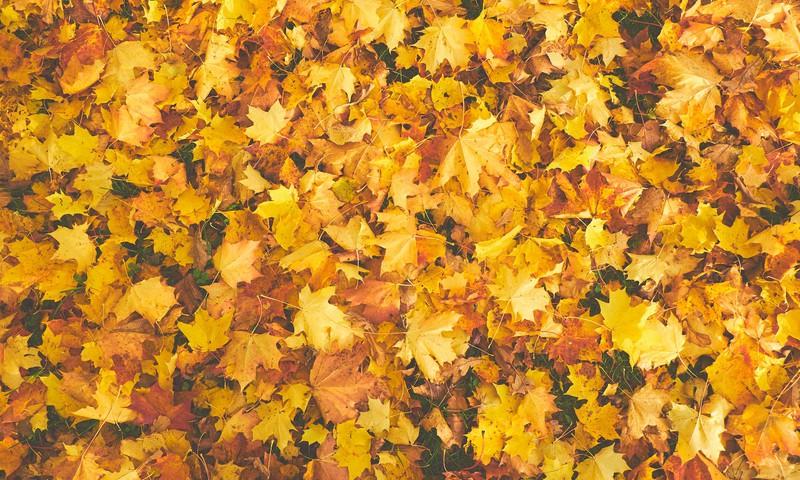 Noslēdzies Huggies Pants rudens fotokonkurss. Kurš tiek pie balvas?