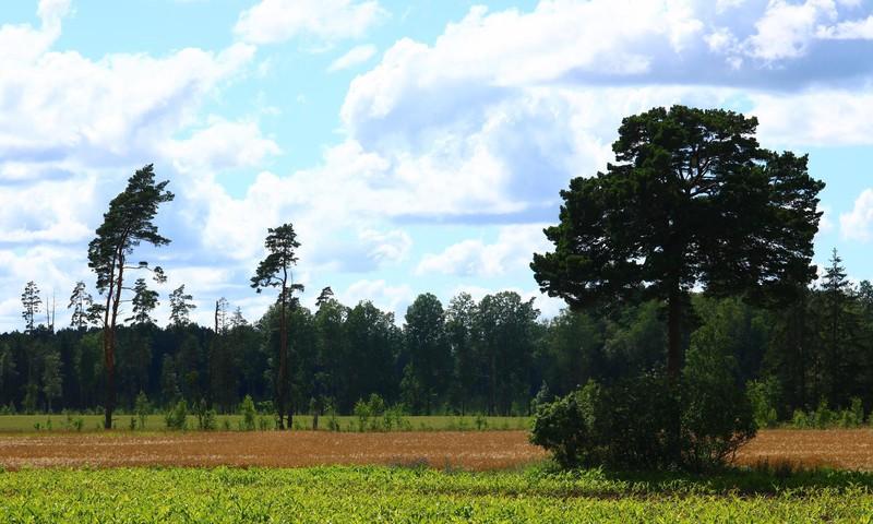 Saldus lauku skaistums