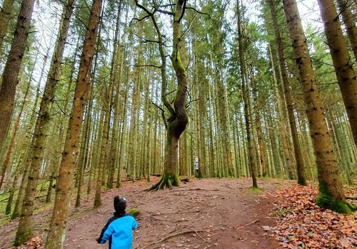 Meklējot ziemu dodamies uz Pokaiņu mežu