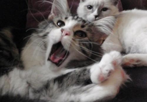 Par kaķiem