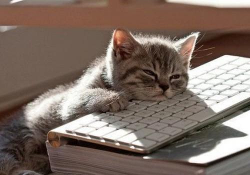 KOMENTĀRU KONKURSS: Murr, murr, dārgie kaķu īpašnieki!