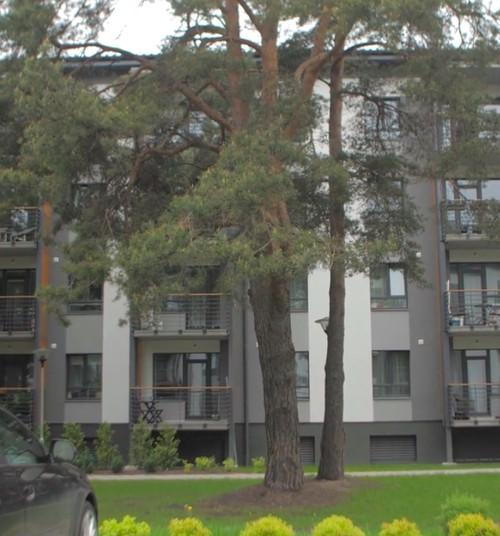 Plāno mājokļa iegādi? Ieklausies eksperta ieteikumos par hipotekārā kredīta piešķiršanu
