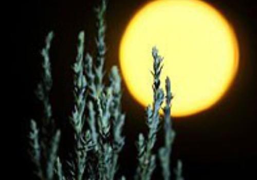 ASTROLOGA BLOGS: Mēness nozīme bērna horoskopā