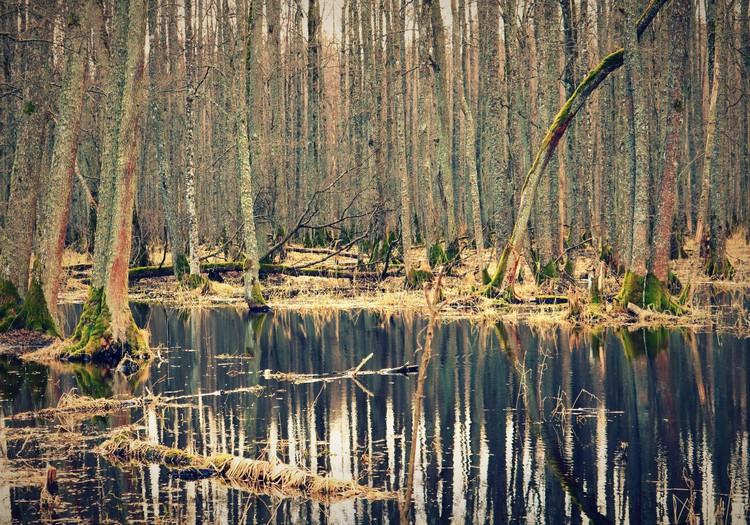 Ceļojam pavasarī- Maģiskā Slokas ezera dabas taka