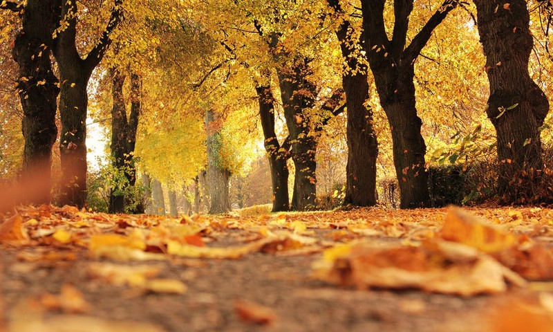 FotoKONKURSS: Mūsu rudens pastaiga
