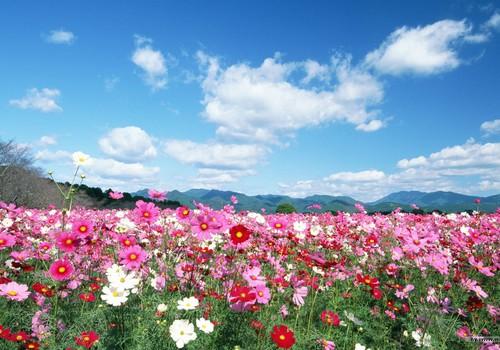 Mūsu pieredze ar Baha ziediem